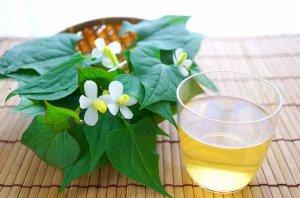 Uống trà diếp cá có tốt không? Trà rau diếp cá của Nhật làm từ lá diếp cá, có tính thanh nhiệt, giải độc, trị mụn, làm mát gan