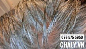Chất hair tonic cần được thoa trực tiếp lên da đầu như thế này